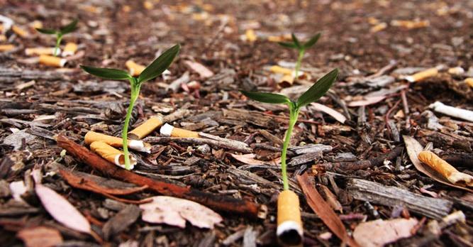 colillas no son biodegradables, contaminan, suciedad, en el suelo, campo, parques