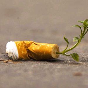 colillas contaminan playas, no son biodegradables, parques, campos, descomposición, reciclar